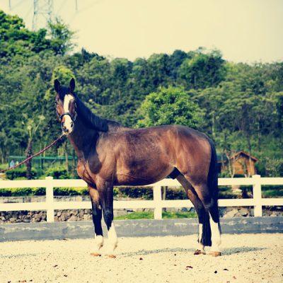 horse-2697578_1920